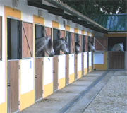 Stalls at Morgado Lusitano